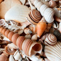 Lots of different seashells piled together in solid background.